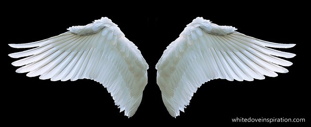wing-3303029_640